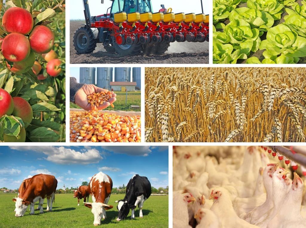 Производство сельскохозяйственной продукции